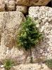 byblos-castle_20121003_1201359806