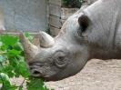 spitzmaulnashorn-02_20121013_1736546625