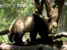 fsu-sandiego-panda-02_20120226_2008822805