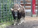 gaur-07_20121001_1757672491