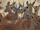 10-23_m_-_impala_20111124_1426308243